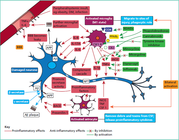 evidence_neuroinflammation_figure_1
